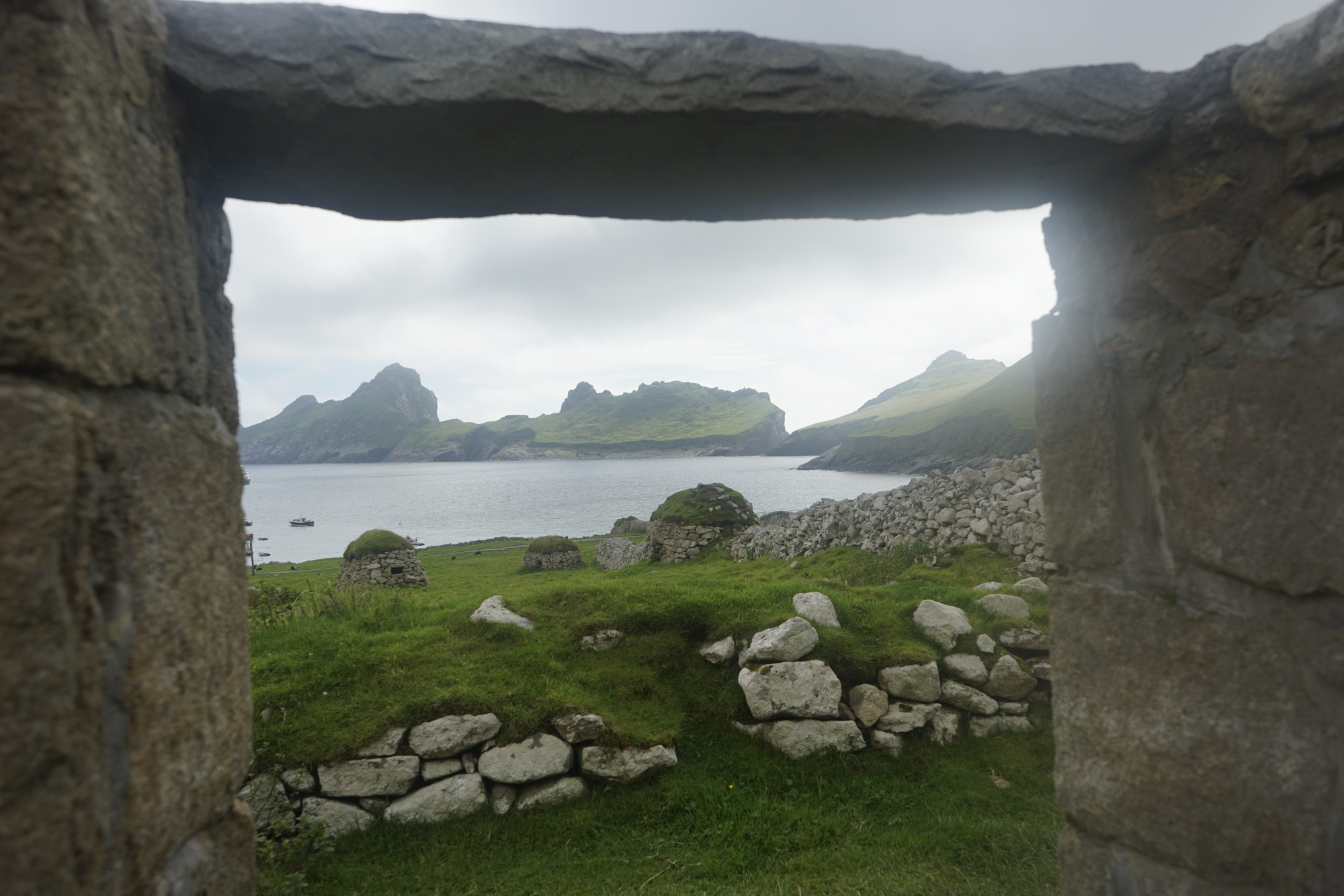 Soay, The Sheep of of St. Kilda, Scotland